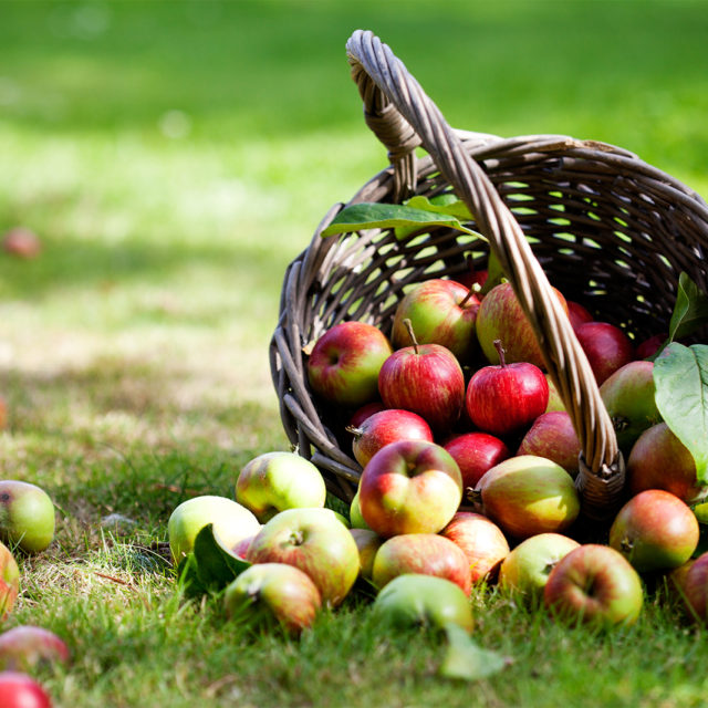 Basket of apples for healthy nutrition